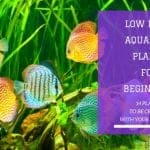 14 Low Light Aquarium Plants For Beginners: How To Be Creative With Your Fish Tank.