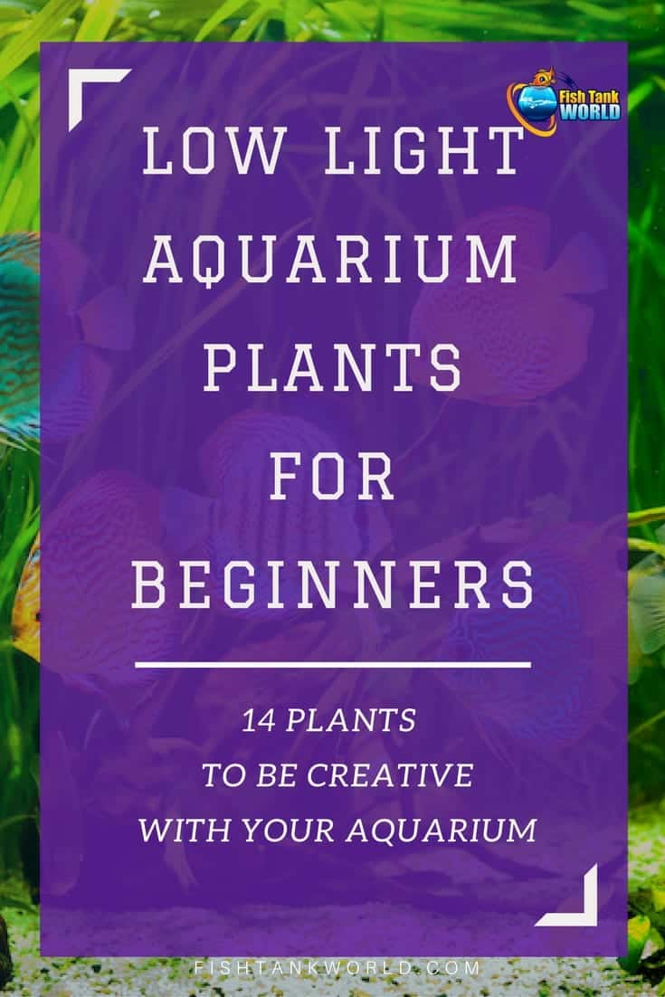 Low light aquarium plants. How to be creative using low light plants in your fish tank and what are the plants that are easier to use for beginners.