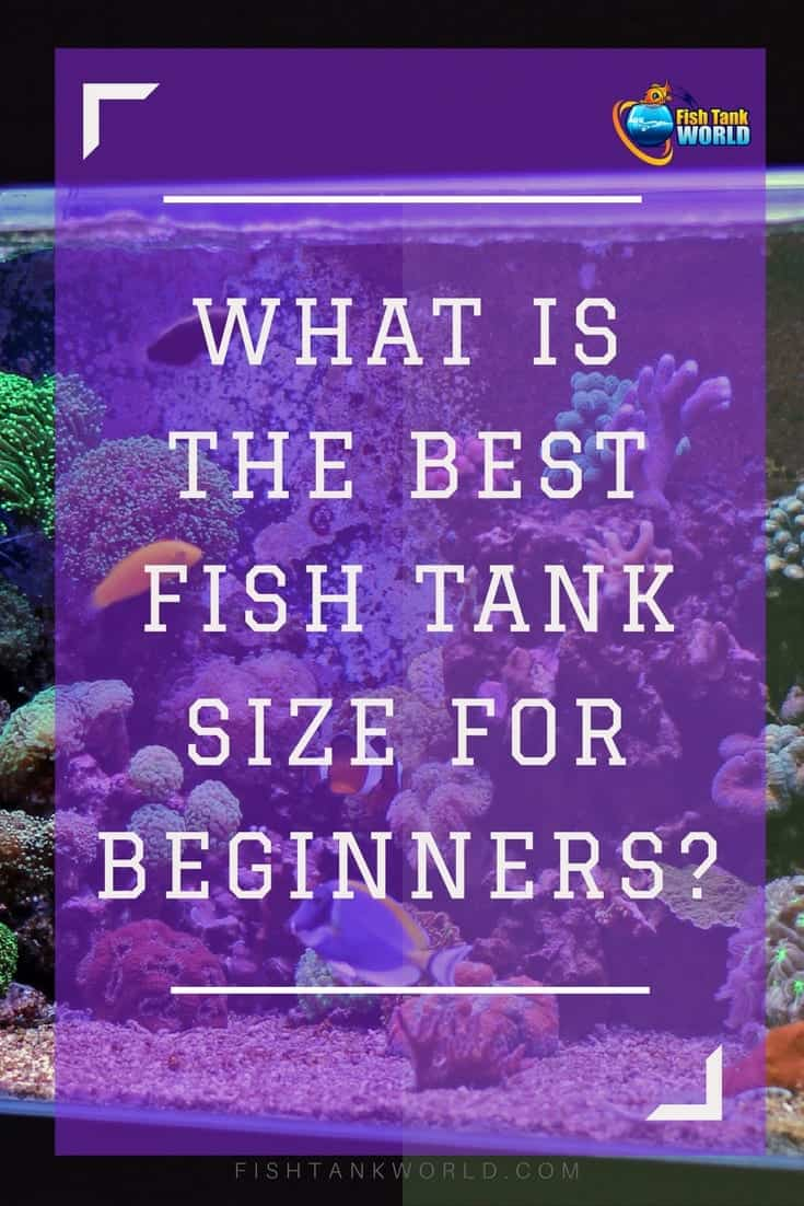 How to choose the size of your first fish tank. It is an important decision that will impact your aquarium experience.