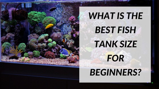 The best fish tank size for beginners fish tank world for Best fish tanks for beginners