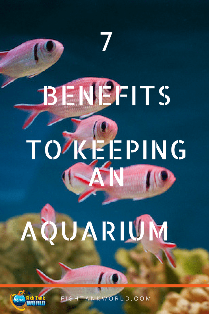 There are so many benefits to keeping an aquarium. It is not only fun but also has positive effects of the health and on productivity