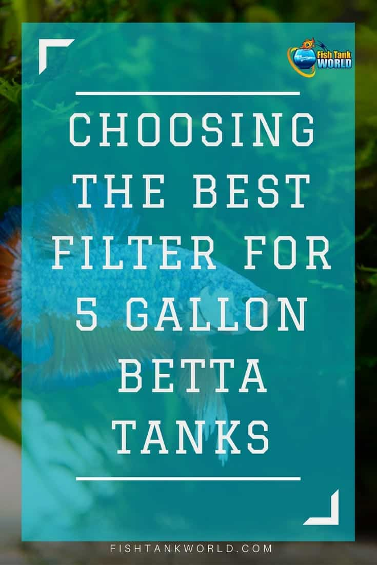 Filters for 5 gallon Betta fish tank. Guide how to choose filters for your small betta fish aquarium