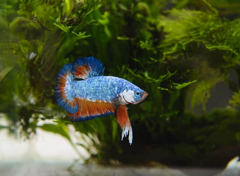 What is the best filter for your 5 gallon betta tank for Filter for betta fish