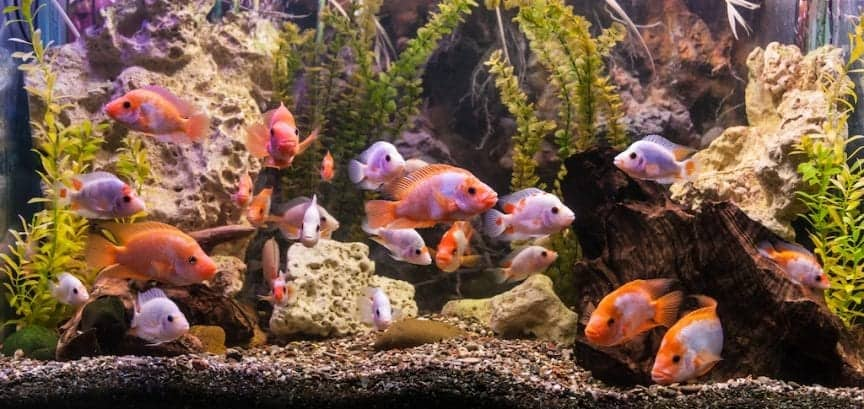 Best Freshwater Aquarium Filters