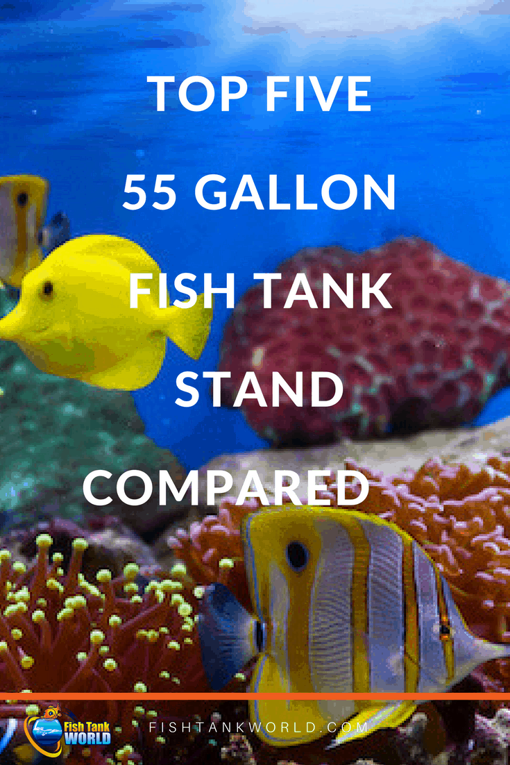 The best 55 gallon fish tank stands compared.