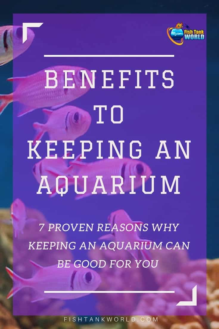 Proven benefits to keeping an aquarium in your home or in your office. Here are 7 proven reasons why you should keep an aquarium. It is not only fun but also has positive effects of the health and on productivity.