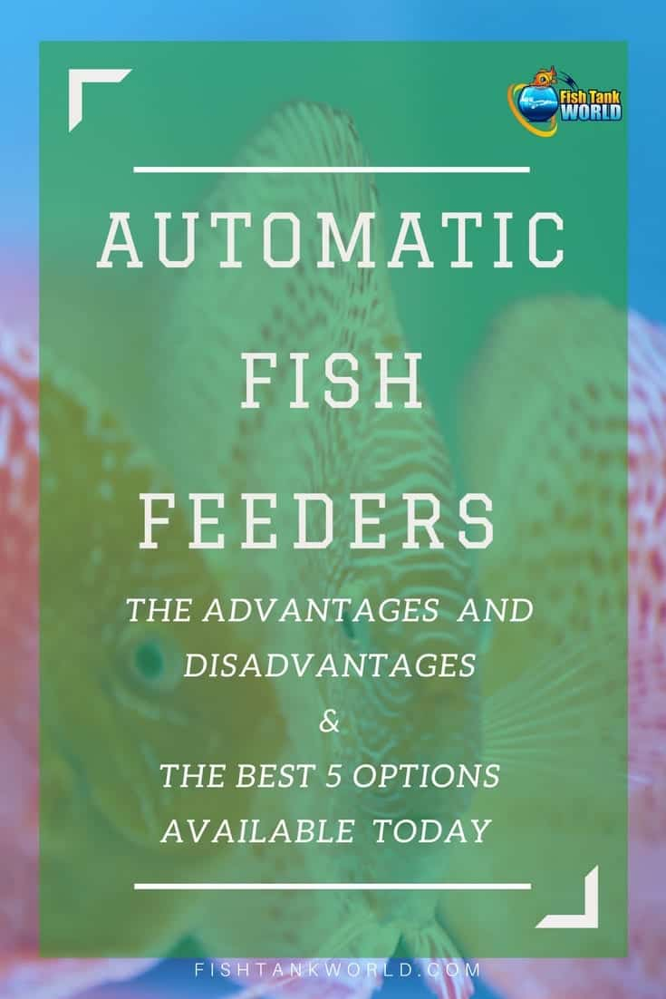 Automatic Fish Feeders Reviews – The Best Choices Reviewed