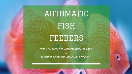 AUTOMATIC FISH FEEDERS REVIEWS