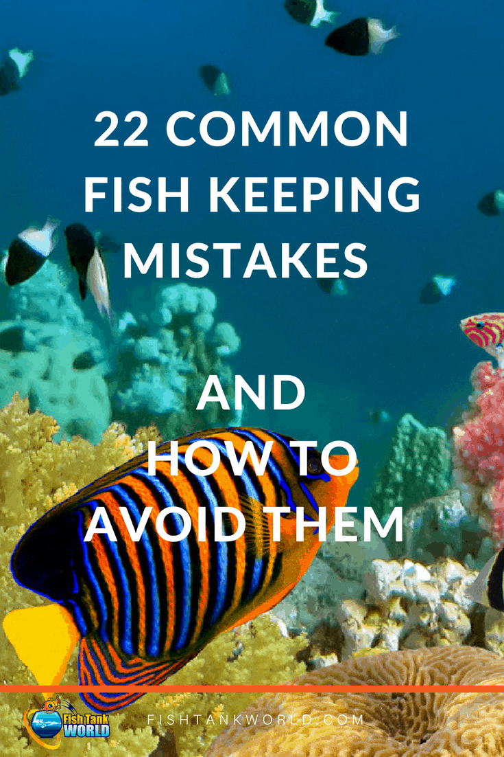 Common fish keeping mistakes and how to avoid them to keep you fish living better and longer.