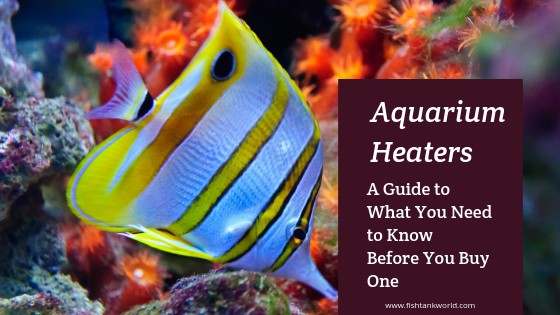 Aquarium Heaters Guide