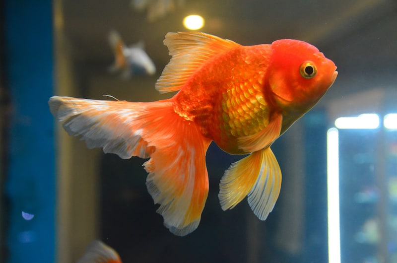 best 10 gallon fish tank kit