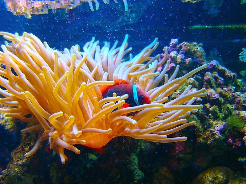 starting a saltwater aquarium for beginners