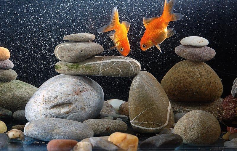 salt in freshwater aquarium