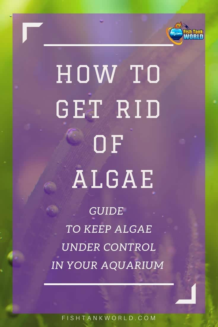 Algae Control - How to Get Rid of Algae in Your Fish Tank
