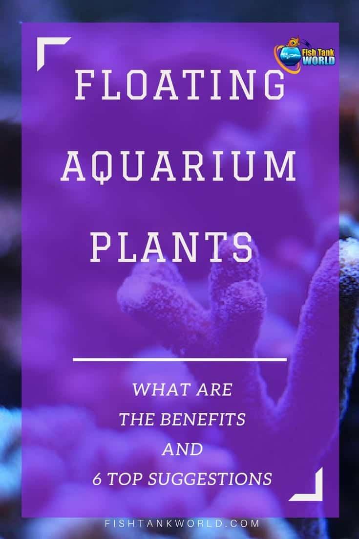 Best Floating Aquarium Plants (Benefits & Reviews)