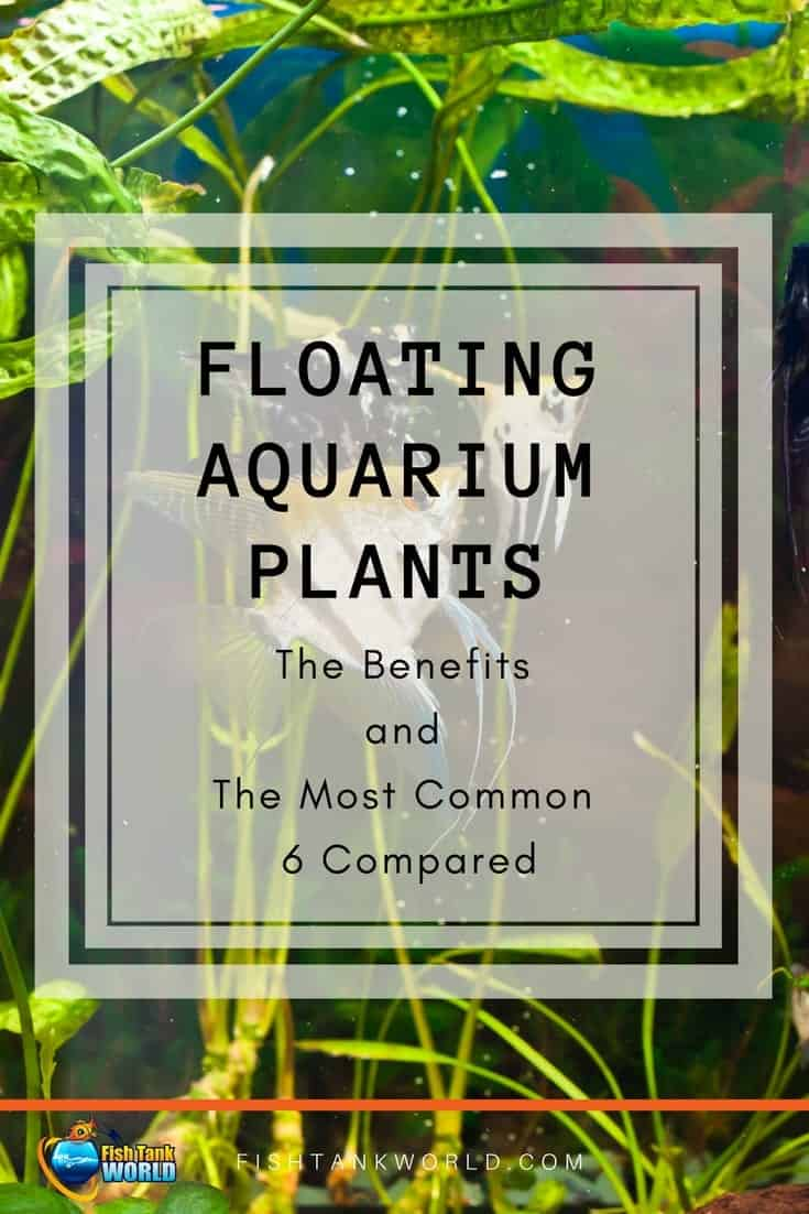 Floating Aquarium Plants. Learn the benefits and make your fish tank more interesting.