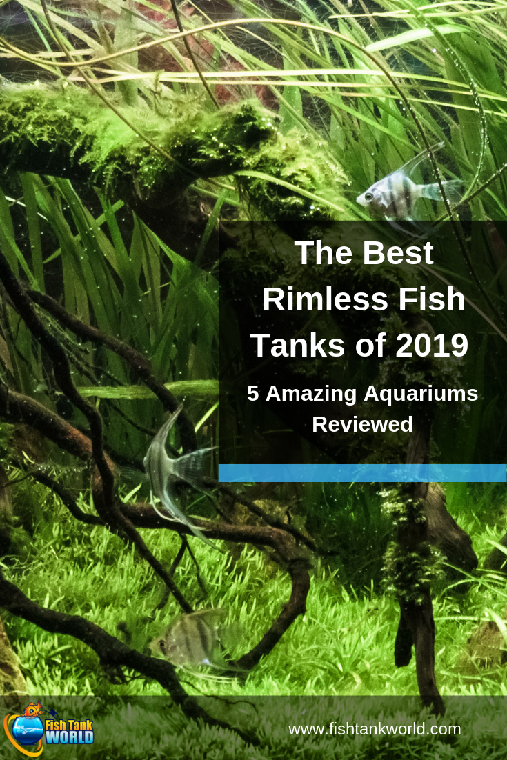 The Best Rimless Fish Tanks of 2019: 5 Stylish Aquariums for Any Room