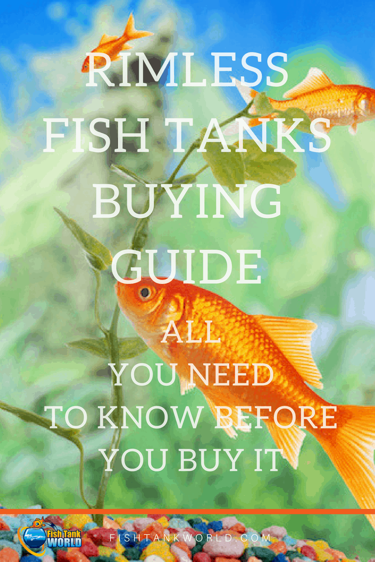 Rimless Fish Tanks. Buying guide. What are Rimless Aquarium and how choose them.