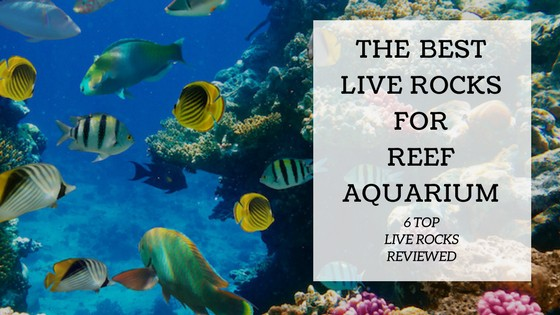 Best Live Rock for Reef Aquarium
