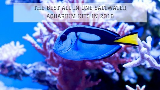 All In One Saltwater Aquarium Kit in 2018: The Best 5 Compared