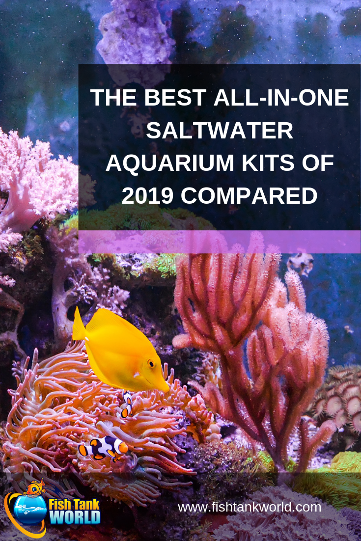 All In One Saltwater Aquarium Kit: The 5 Best Starter Packages of 2019