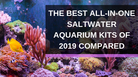 All In One R Aquarium Kit The