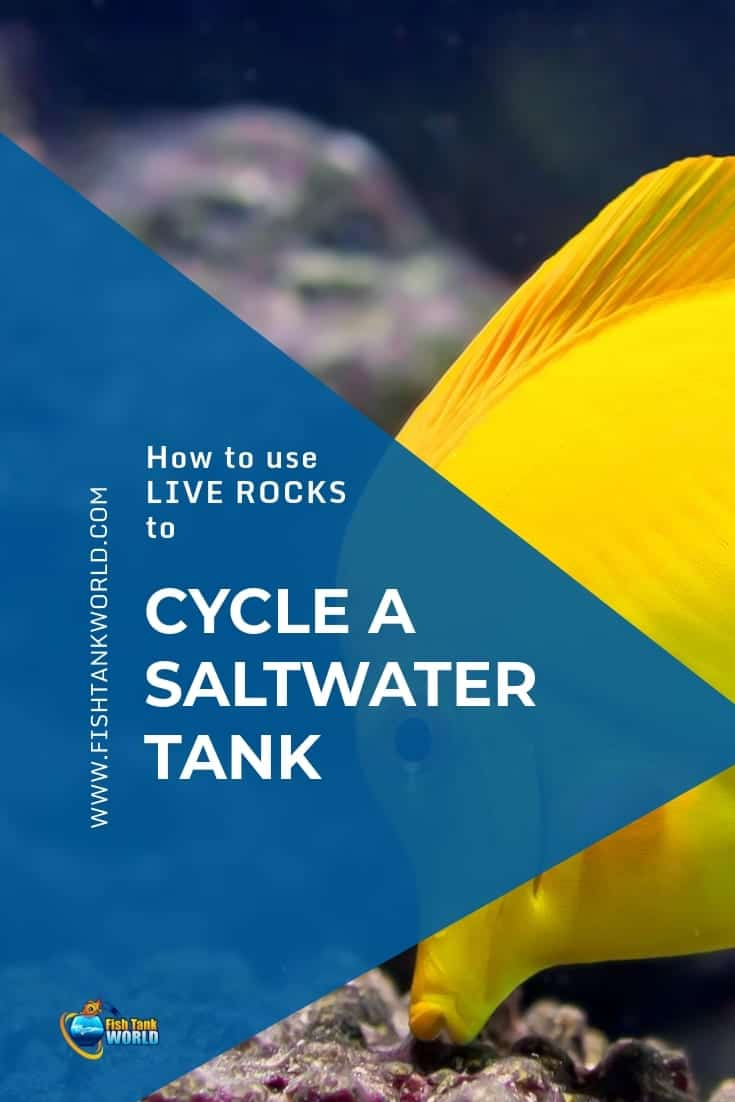 Cycling A Saltwater Tank Using Live Rock