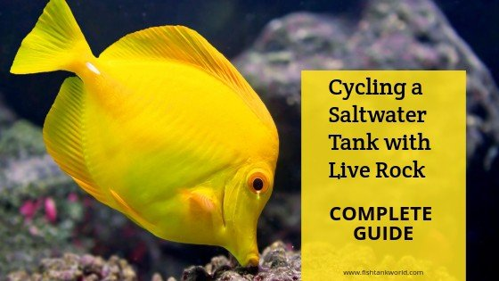 cycling a saltwater tank with live rock