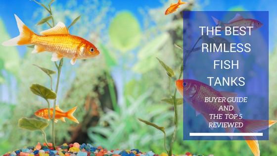 BEST RIMLESS FISH TANKS