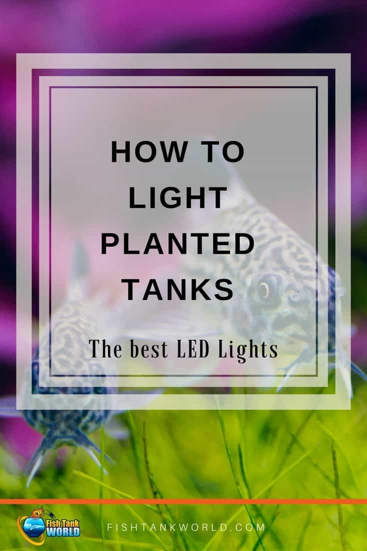 Lighting aquarium is aesthetic and necessity if you have live plants in your fish tank. Led lights for planted tanks are a good choice.
