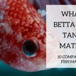 10 of The Best Tank Mates For Betta Fish