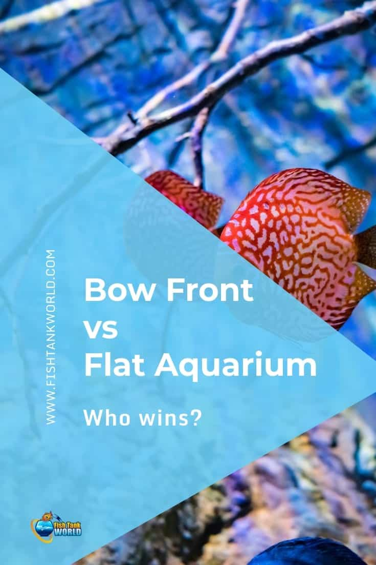Bow Front vs Flat Aquariums: Which One to Buy?