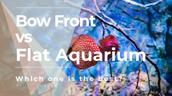 Bow Front vs Flat Aquariums