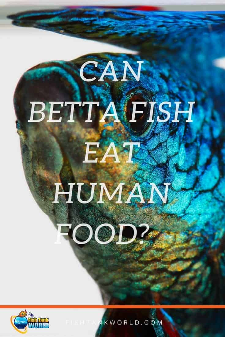 Pellets, flakes, live food, frozen food … it's a topic that Betta owners love to discuss.  One of the topics that often comes in for controversy though, is whether Betta fish can eat human food. Can Betta Fish eat peas, fruit and meat?
