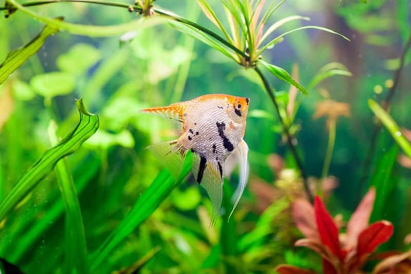 self cleaning aquarium