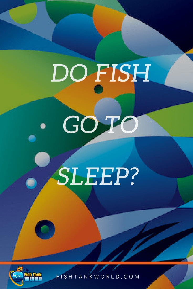 Learn everything about how fish sleep in the aquarium, how long and what you need to do to make your fish sleep properly in the fish tank.