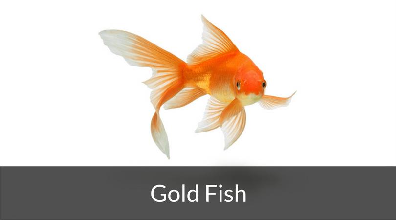 Aquarium Fish Articles Fish Tank World