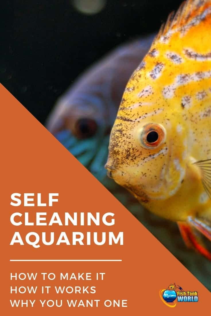 Self Cleaning Aquarium. How to make a self sustaining aquarium biosphere, How They Work and Why You May Want a Self Cleaning Low Maintenance Aquarium. Check out how when control technology, carefully selected live plants, and compatible aquarium fish species work together in complete harmony, the fish tank is considered to be self cleaning and self sustaining aquarium.