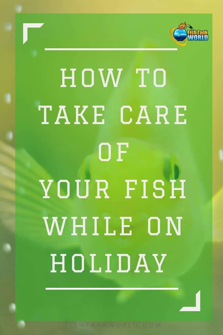 Fish care while on vacation. Here are the tips to travel leaving your aquarium taken care of and your fish safe to make sure you enjoy them when back.