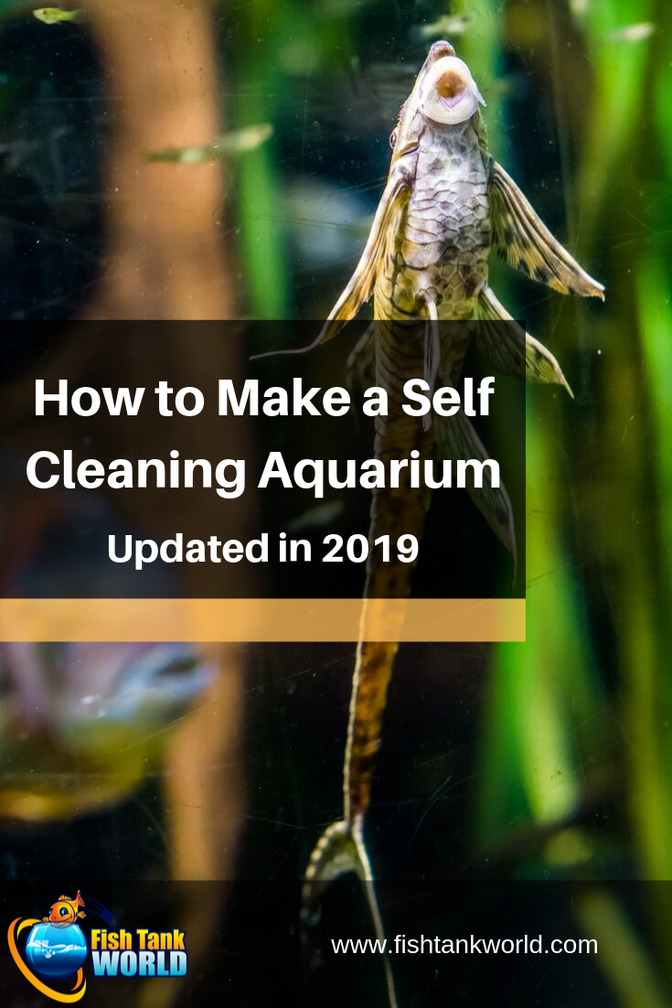The complete guide on how to make a self-cleaning aquarium. The low maitenance and self sustaining aquarium of every fishkeeper\'s dreams!