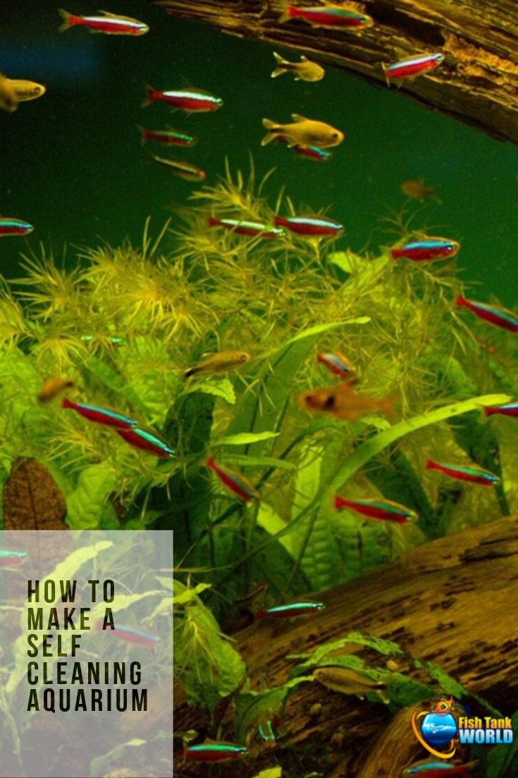 Self Cleaning Aquarium. How to make a self sustaining aquarium biosphere, how they work, and why you may want a self cleaning low maintenance aquarium. Check out how control technology, carefully selected live plants, and compatible aquarium fish species can work and live together in complete harmony to create a self cleaning and self sustaining the fish tank.