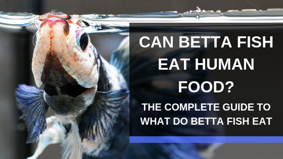 A Complete Guide to What Do Betta Fish Eat: Can They Eat Human Food?