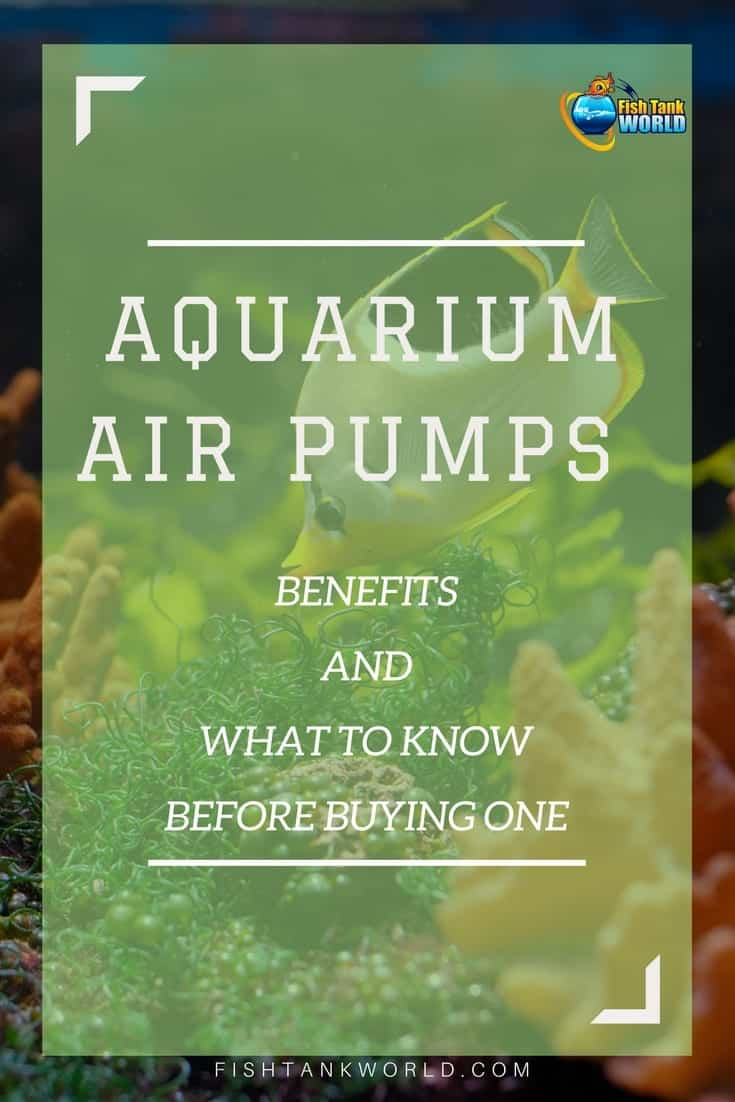 Aquarium Air Pumps. The benefits and what you should know before buying an air pump for your aquarium.