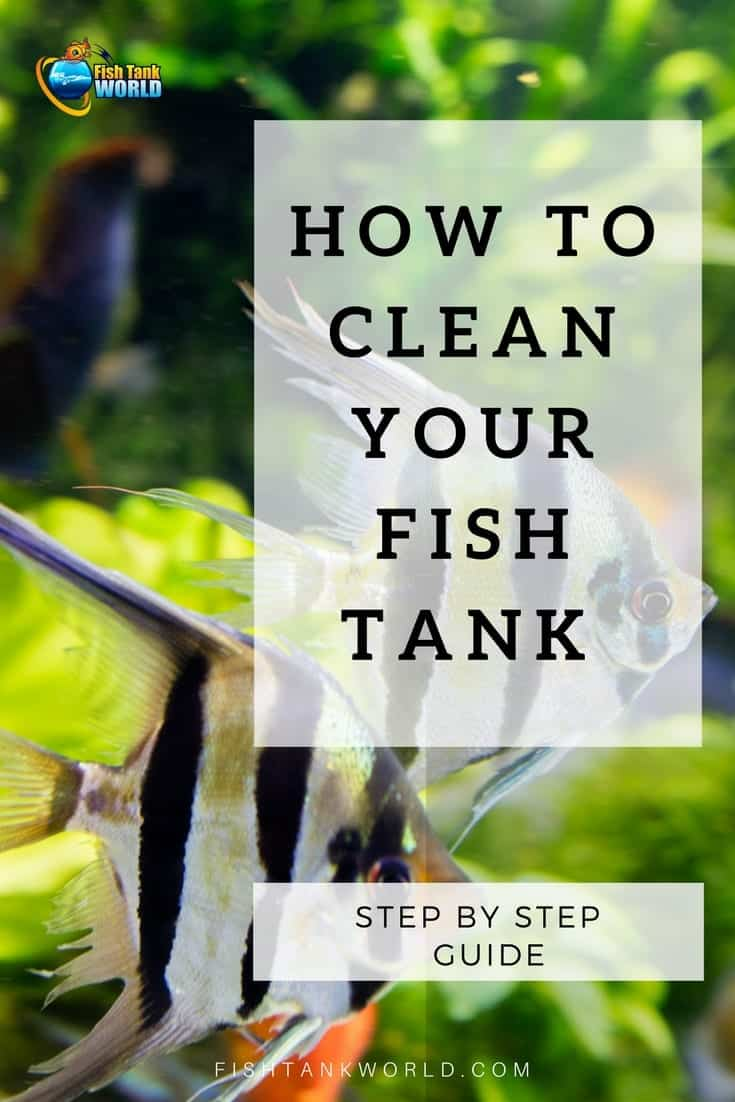 How often should you clean your fish tank and how? How often should you clean your aquarium filter? How often should you change the water in your fish tank? Should you remove your fish when you're cleaning your aquarium? These questions and more answered in this guide to cleaning a fish tank.