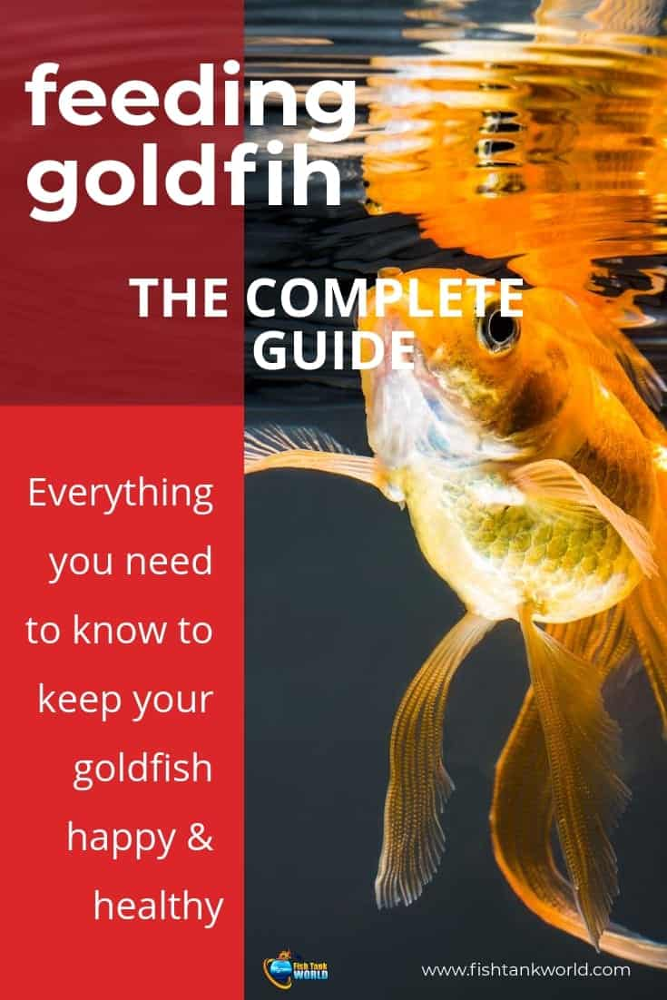 Goldfish are one of the most commonly stocked fish breeds in the world. How you feed them and the food you provide them is extremely important to have long living and healthy goldfish in your tank. Here is a complete Guide on Goldfish Food and Feeding. We cover what goldfish eat in the wild and what in captivity, what is the best food you can give to your goldfish and how often goldfish should eat.