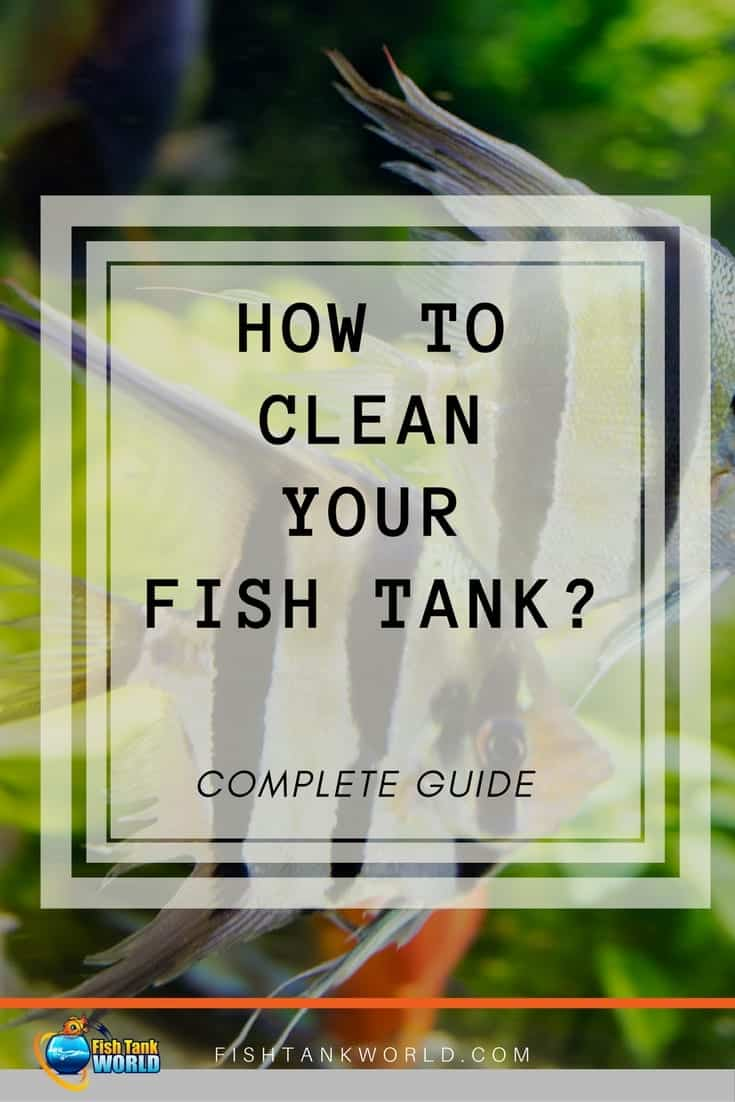 How often should you clean your fish tank and how? How often should you clean your aquarium filter? How often should you change the water in your fish tank? Should you remove your fish when you're cleaning your aquarium? These questions and more answered in this article.