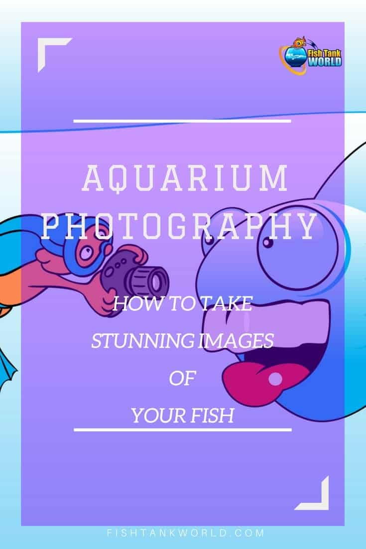 Aquarium photography tips to take stunning images of your aquarium and your fish. Learn the tricks that will improve the photos of your aquarium and master how to make your fish look even more amazing in your images.