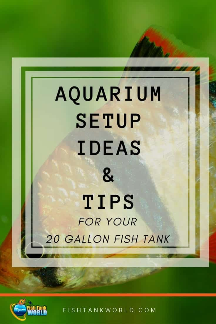 Setup Ideas For Your 20 Gallon Fish Tank. How to choose the fish and how many, what aquarium equipment is required, plants and decorations to inspire your 20 gallon fish tank setup.