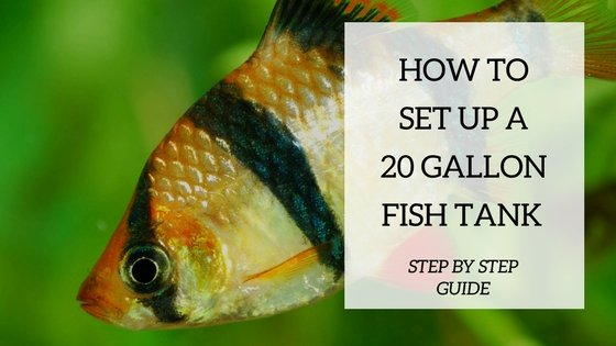 Setup Ideas For Your 20 Gallon Fish Tank