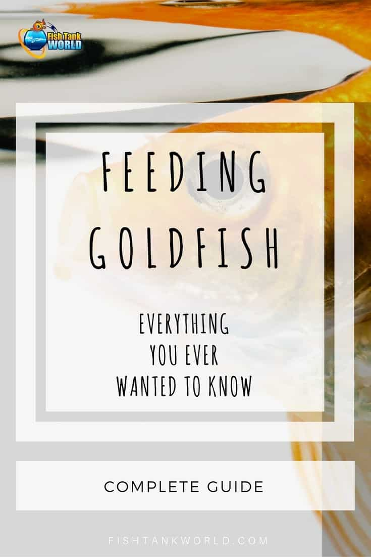 Feeding goldfish the complete guide fish tank world for How often do i feed my betta fish